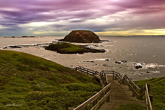 the Nobbies in Victoria, Australia.  A great area where man and nature co-exist. $ #Australia