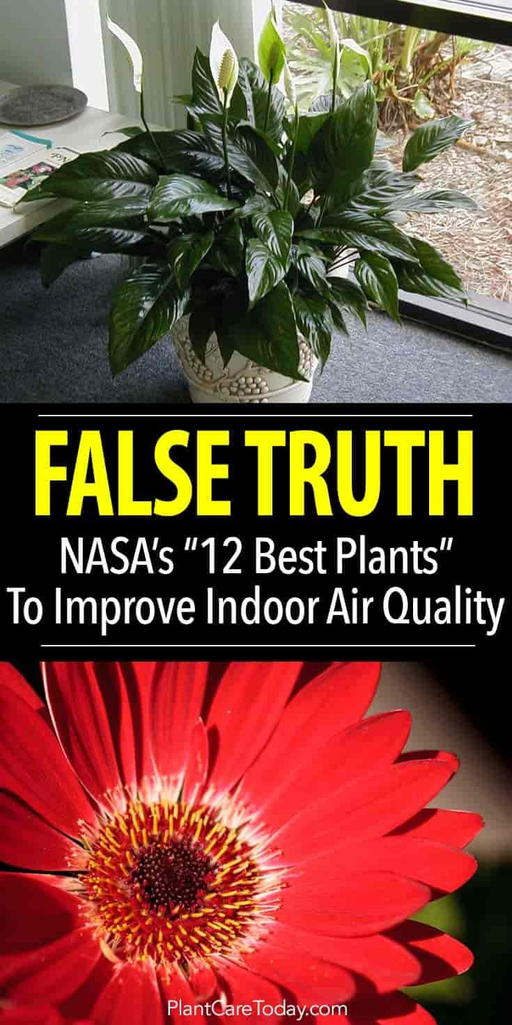 """The FALSE TRUTH - Did the NASA """"Clean Air Study"""" recommend 12 houseplants as the BEST for improving indoor air quality? Or is this """"Stretching the Truth""""?"""