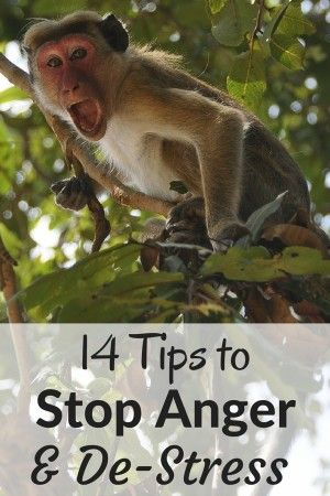 14 Tips to help you de-stress in moments of anger. Easy ways to slow down your thinking and regain your balance so you can be happy and let the anger go. Don't let anger control you. Learn to control your anger.