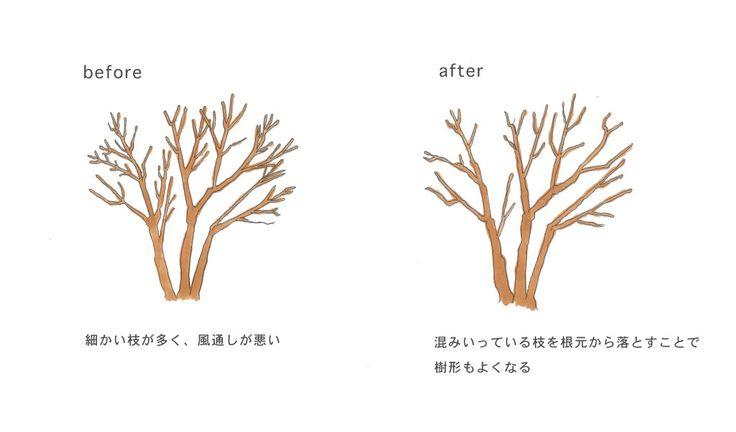 「剪定」の基本。意味・方法・種類から切り戻しとの違いとは?