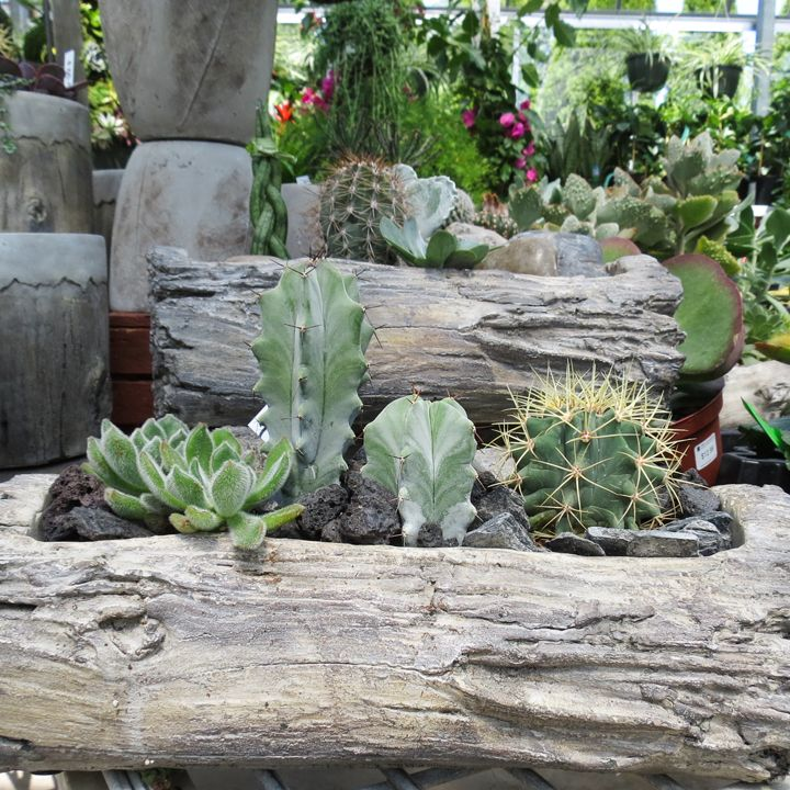 Succulents In Driftwood. #succulents #Glasshouse #Chatham   Visit Http://. Garden  CentreDriftwoodDelicious