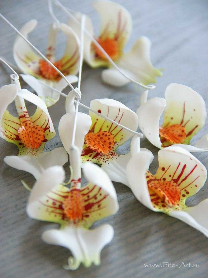 Ekaterina Zverzhanskaya /Clay flowers Handmade orchids