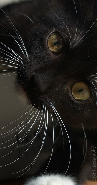 #gatos #cvamanecer