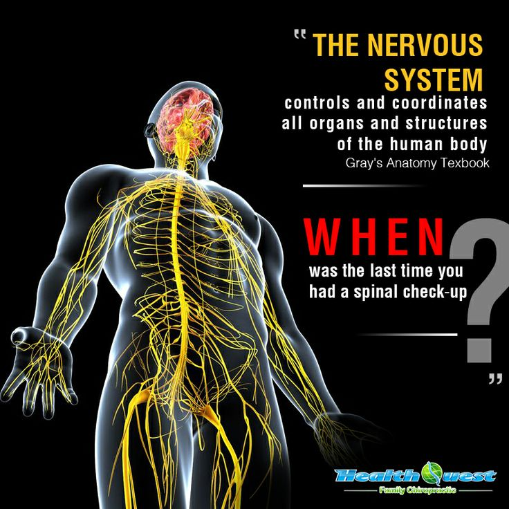 56 best Nerves images on Pinterest | Nervous system, Physical ...