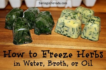 How to freeze herbs in oil, water, or broth. This is a great way to preserve extra herbs that you normally use in cooking.