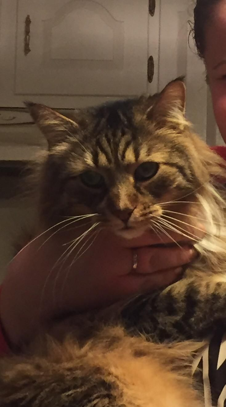 NAME  Minou STATUS  SAFE  GENDER  Male SPECIES  Cat AREA LAST SEEN  Glastonbury, CT 06033 DATE LAST SEEN  February 17, 2017