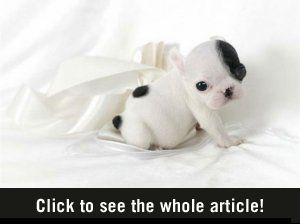 Cute Puppy dogs - not a video but impossibly cute puppy photos