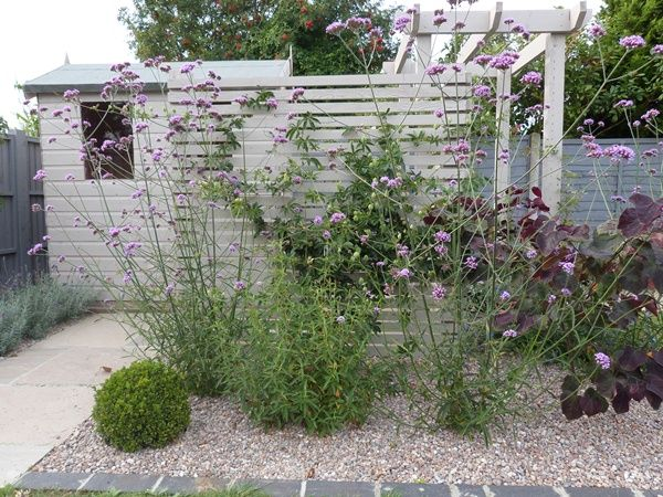 New small garden design painted shed Fencing trellis garden ideas mauve lilac grey