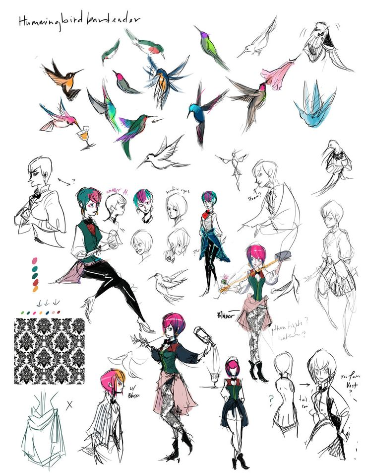 Hummingbird Sketches by shark-bomb on deviantART