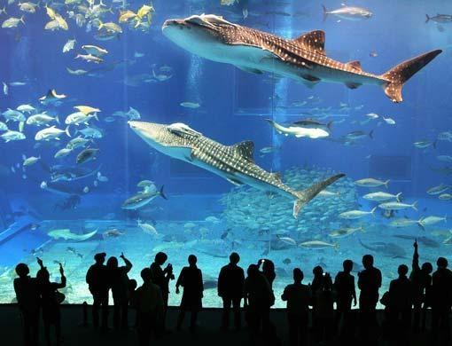Churuami Aquarium Okinawa, JP. The 2nd largest aquarium in ...