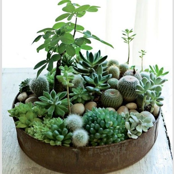 Succulent forest - definitely going to try and make one of these! theguideonline.com.au