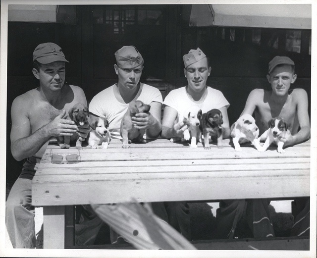 """Somewhere in the Marshall Islands, Cute aren't they?"" (puppies of course!), ca. 1941-1945 by Marine Corps Archives & Special Collections, via Flickr. These four Marines have taken over the job of being foster mother to the pups, after their real mother left behind by the Japanese, gave birth to a litter of 13 and couldn't take care of all of them. From the Photo Collection (COLL/3948), Marine Corps Archives & Special Collections"