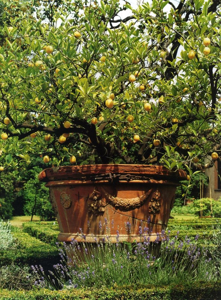 Renaissance garden of palazzo corsini florence from an for Victoria magazine low country style