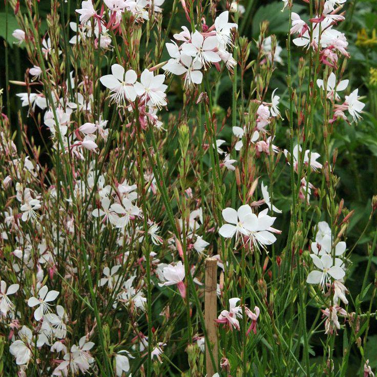 281 besten Blumenbeet Bilder auf Pinterest | Deko, Garten pflanzen ...