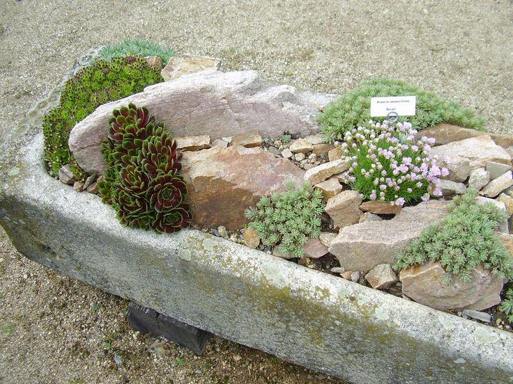 Where Buy Rocks Garden