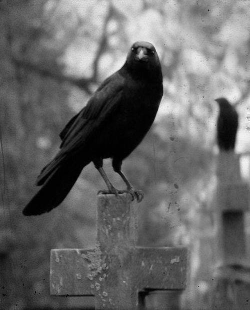 Creepy Bastard.  Raven