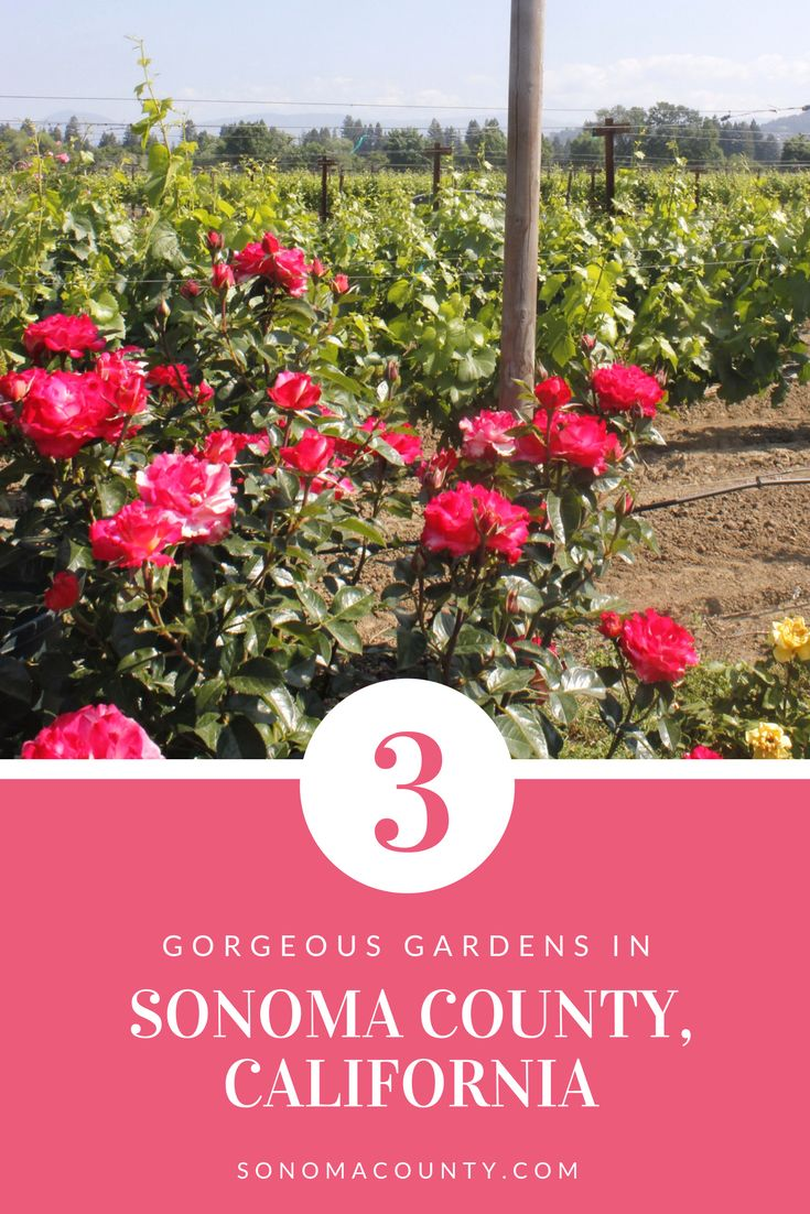 3 Gorgeous Gardens to Visit in Spring in Sonoma County | Sonoma County, CA