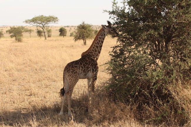 Destination voyage de noces : Tanzanie et Zanzibar !