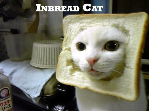 inbread cat... MT, i totally laughed out loud and had to cross my legs to keep me from peeing...  :): Inbread Cat, Funny Things, Funny Cat, Pet, Inbreadcat, Breads, Funny Stuff, Funny Animal, Inbr Cat