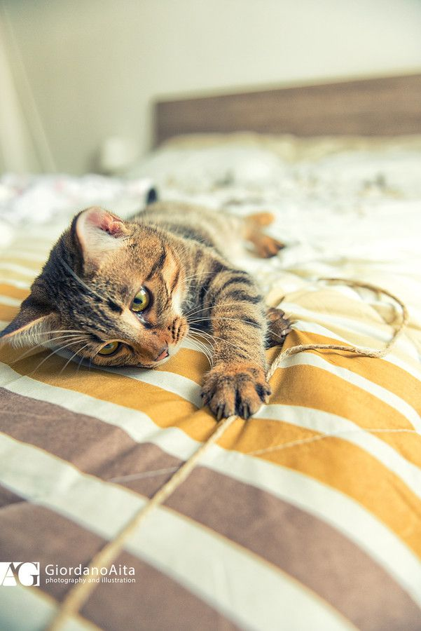 Cat plays on bed by Giordano Aita on 500px