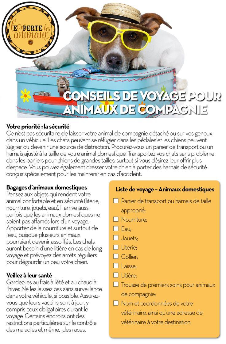 Turbo Les 25 meilleures idées de la catégorie Patte de chien sur  BI15