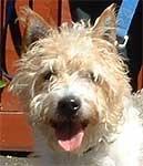 binfield dog rescue