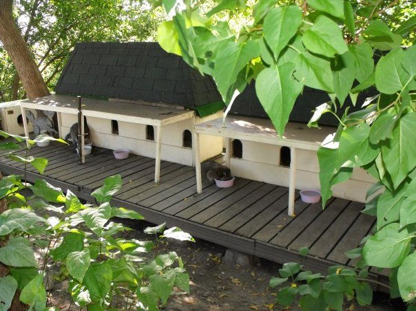 Disneyland Cat Feeding Stations / fancy feral cat shelter