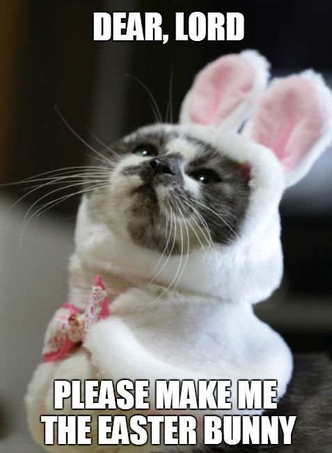 Cat Easter Meme