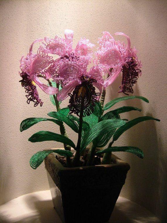 Cattleya Orchid (Free