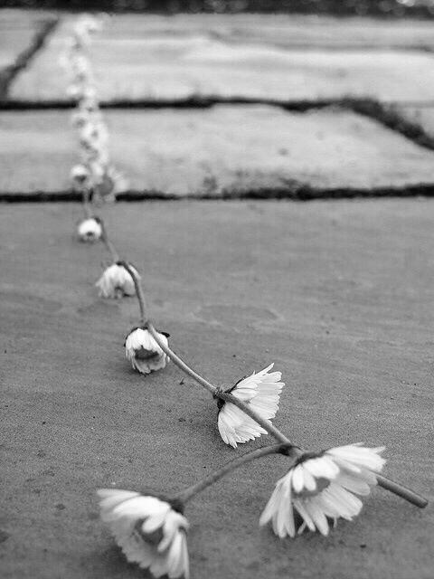 in the past . Bloemenkransjes maken