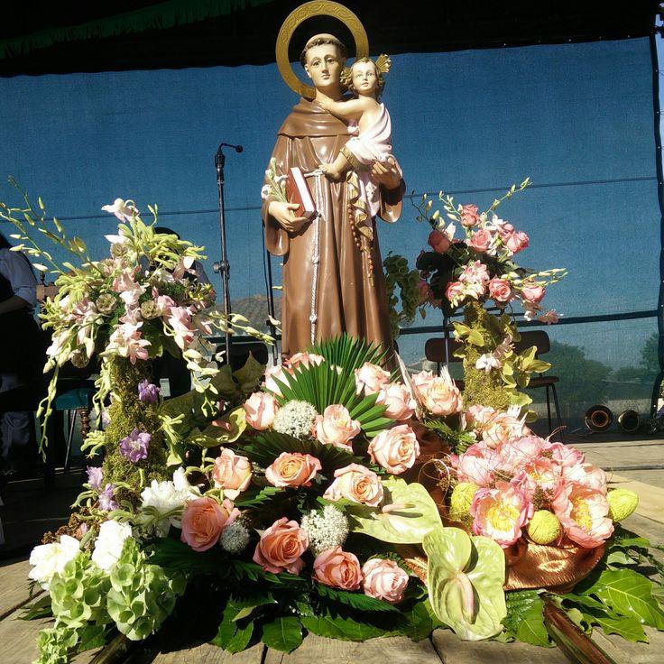 Santo António - www.orquideias.com