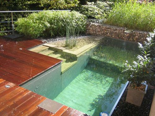 Natural swimming pools (NSPs) are chemical-free & self-cleaning; solve personal & local requirements (screen, fence, etc) & these could be the future norm...