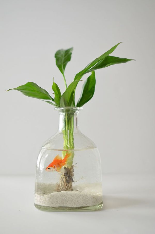 人気のボトルアクアリウムをお部屋に。作り方とおすすめ熱帯魚   iemo[イエモ]