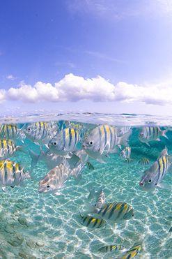 Half and half shoot off Seven Mile Beach, Grand Cayman