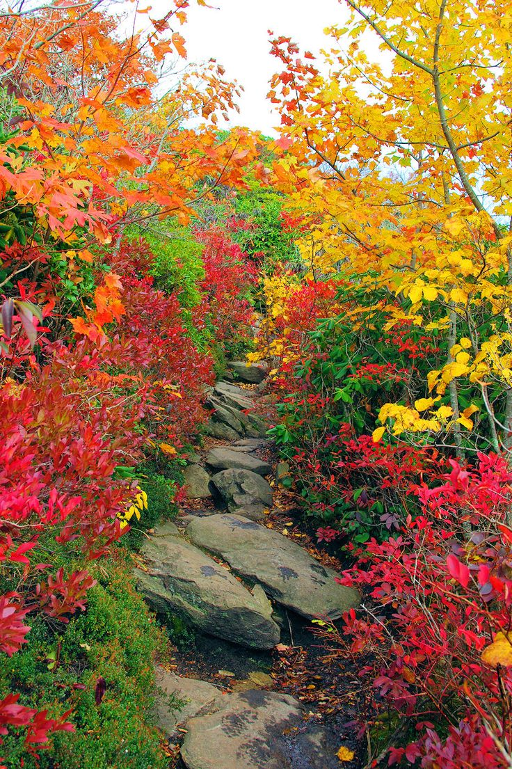 Hiking trail in the Blue Ridge Mountains of North Carolina near Asheville.  Fall is the BEST time.