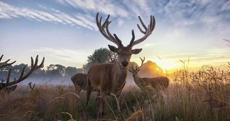 deer wildlife 4k ultra hd wallpaper