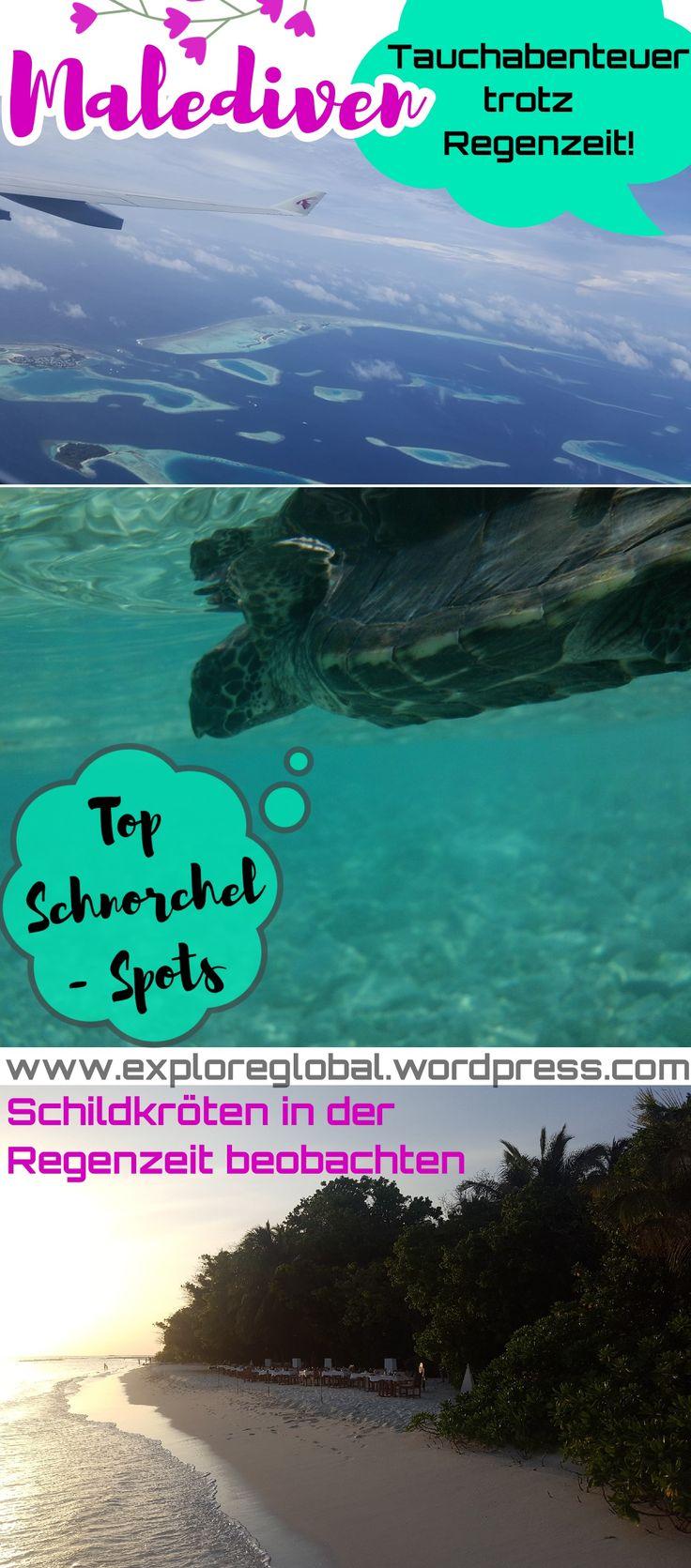 Praktisch während der Regenzeit auf den Malediven – diese Schnorchelplätze begeistern …   – Reiseziele