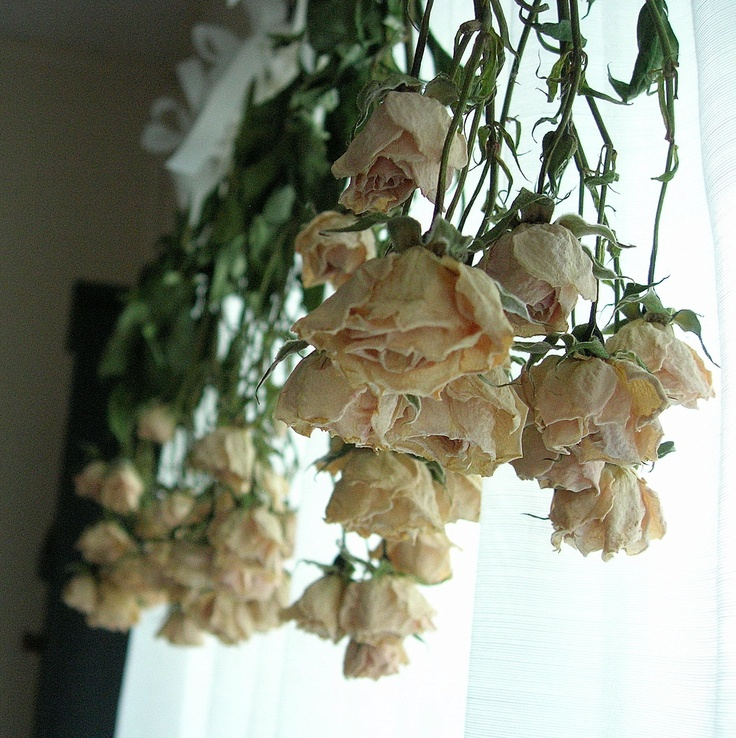 63 best Dead roses images on Pinterest   Dried flowers, Dry flowers ...