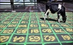 Cow chip bingo fundraising event - okay - thought this was funny - it's certainly different than a golf ball drop.