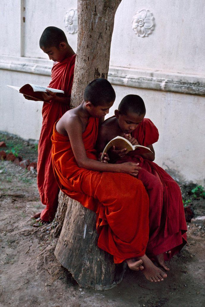 Three novice monks study their books by a tree, Sri Lanka,