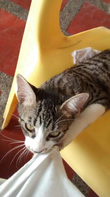 Hermoso gatico