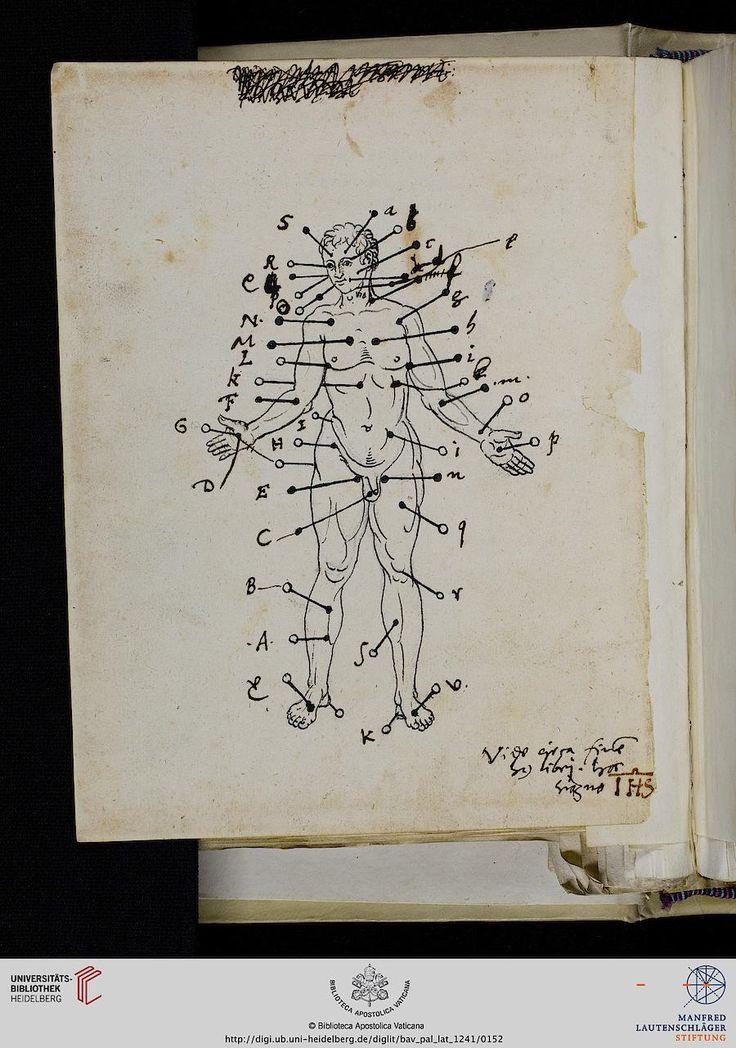 medical illustration - human body - Vatikan, Biblioteca Apostolica Vaticana, Pal. lat. 1241  Ambrosius Prechtl  Collectanea medica — Regensburg, 1559-1565