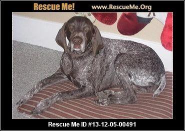 Nero― Washington German Shorthaired Pointer Rescue ― ADOPTIONS ―RescueMe.Org
