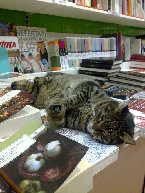 Ogni pomeriggio, alle 5, il gatto Pippo entra alla libreria Edison di Pistoia e si accomoda tra i libri (in genere preferisce la saggistica) o magari alla cassa.