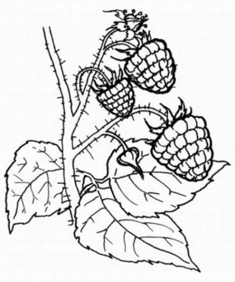 malvorlagen zum ausmalen ausmalbilder früchte obst und