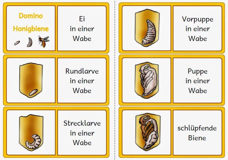 Arbeitsblatt Bienen Grundschule : Entwicklung biene google suche schulzeug bienen