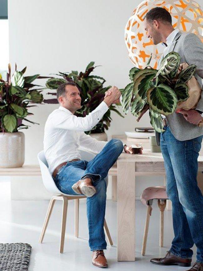 Calathea, woonplant boordevol symboliek - mooiwatplantendoen.nl