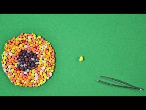 Making a TED-Ed Lesson: Animation - YouTube