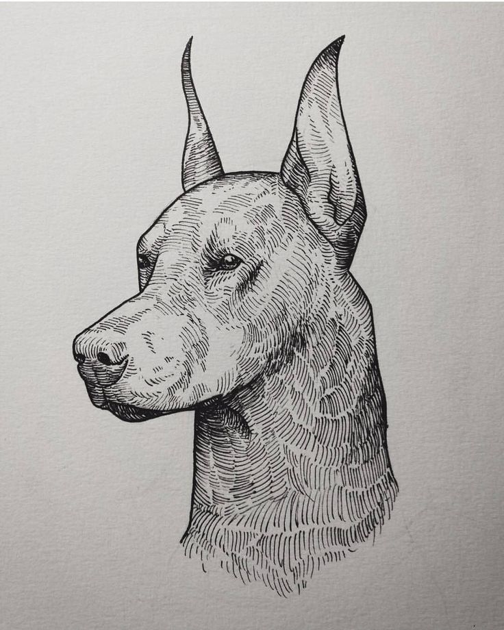 Repost again. Barely got any spare time for drawing new content atm. #art #illustration #tegning #drawing #dotwork #ink #tatovering #tattoo #tattoodesign #trondheim #norge #norway #sketchbook #sketch #pen #dog #puppy #doberman #k9
