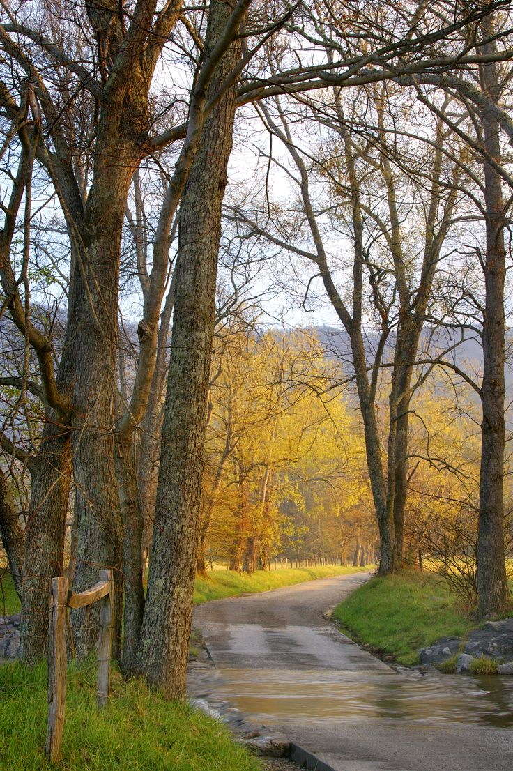 a visit to cades cove essay Please suggest if it will be ok to visit during that time  great smoky mountains national park great smoky mountains national park tourism.